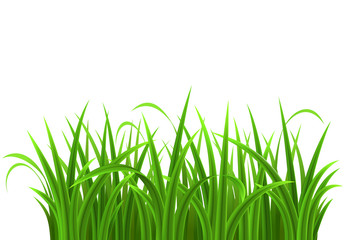 Green grass isolated on white background, vector illustration