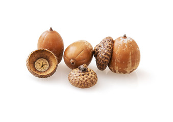 Acorns with reflection