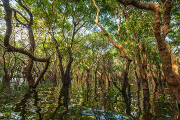 Flooded trees in mangrove rain forest