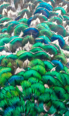 The beauty of the colors and designs of peacock feathers.