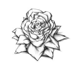 Illustration einer Papierblüte