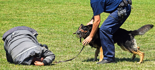 Police officer with his dog arrests a criminal on a training
