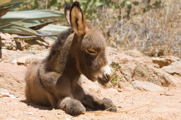 Donkey foal at the campsite.