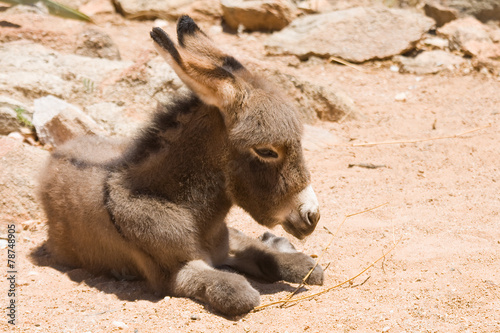 Papiers peints Ane Donkey foal at the campsite.