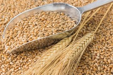 Weizenkörner, Getreideschaufel, Weizenähren