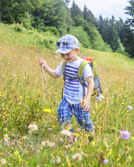 kleiner Wandersmann in blühender Wiese