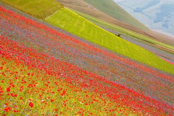 Tutti i colori della fioritura