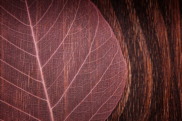 A macro photo of a beautiful pink see-though leaf on an old vint