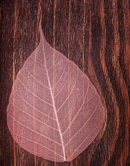 A beautiful pink see-though leaf on an old vintage background