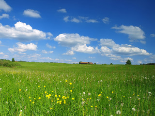 spring meadow with blue sky and clouds