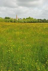 Green grass meadow woody hedgerow