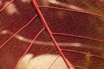 Filigrane Strukturen - Blattadern eines Deko-Artikels