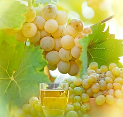 Riesling - green, white grape and wine