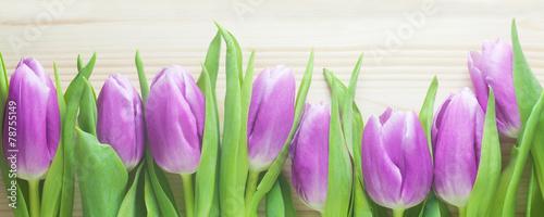 Obraz na Plexi Tulips