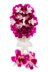 garland orchid on white background.