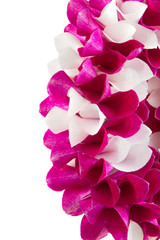 Close up garland orchid