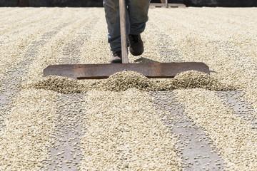 Hochlandkaffee beim trocknen in Costa Rica
