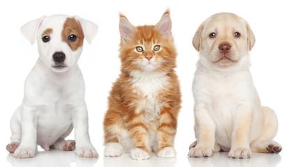 Собаки и Кот