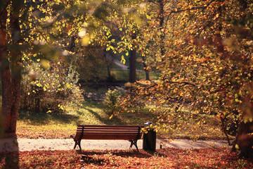 garden bench in autumn park landscape