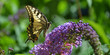 canvas print picture - schmetterling, garten