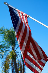 American Flag with palm tree