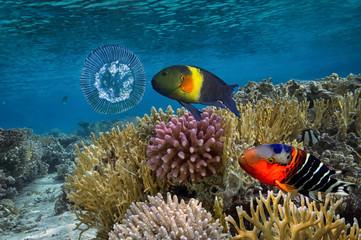 underwater image of jellyfishes