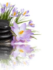 purple flowers black stones on water