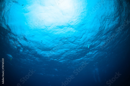 Leinwanddruck Bild sunshine above bunaken sulawesi indonesia underwater photo