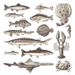 fish and seafood - collection of design elements - 78765923