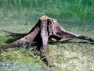 Wurzel, Baum