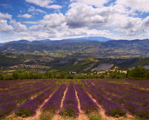 mountains and Lavender field in Provence