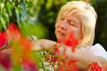Alte Frau macht Gartenarbeit im Garten