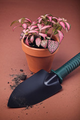 Spade and flower in pot