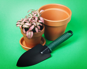 Flower in pot on green background