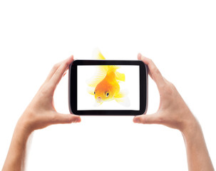 goldfish and electronic tablet on a white background isolated