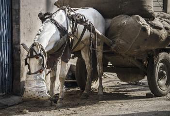 Eating horse on rural street