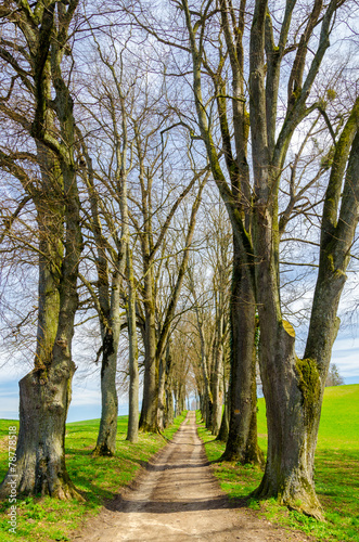 canvas print picture Allee