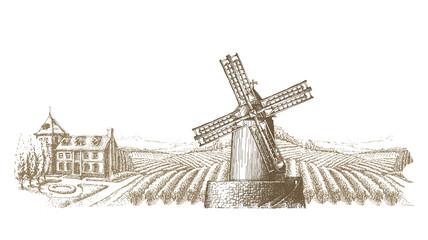 vineyard vector logo design template. farm or bountiful harvest