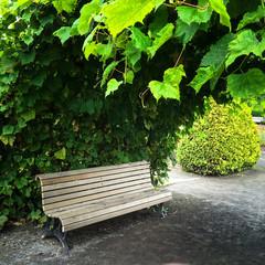 Wooden bench in summer garden