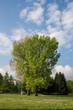 canvas print picture - Baum im Park