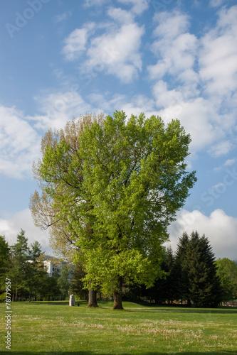 canvas print picture Baum im Park