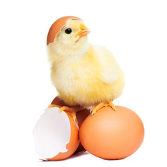 Cute funny easter chick