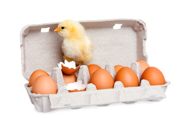 Eggs in the package with cute baby chick