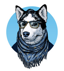 Husky. Dog wearing spectacles and scarf.