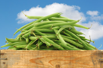 green beans in a wooden crate against a blue sky with clouds