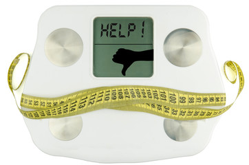 Weightscale with tape measure bow . fat