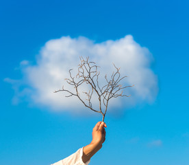 Tree in hand over against cloud
