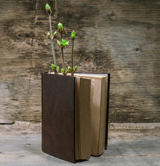book and a branch with young green leaves