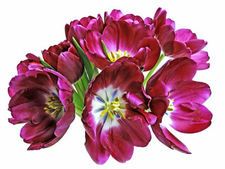 purple tulips in a wase.