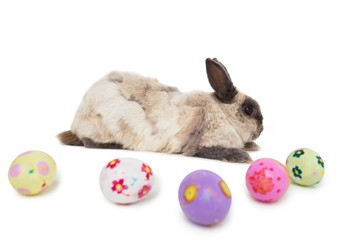 Fluffy bunny with Easter eggs on white background